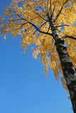Árvore durante a queda Fotografia de Stock