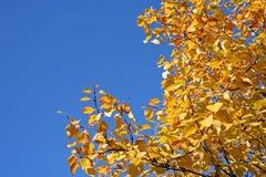 Árvore durante a queda Fotografia de Stock Royalty Free