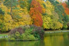 Árvore e água foto de stock