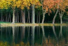 Árvore e água imagens de stock royalty free