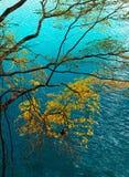Árvore e água azul imagem de stock