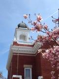 Árvore e abóbada de florescência cor-de-rosa Fotografia de Stock Royalty Free
