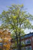 Árvore e apartamentos do outono Imagens de Stock Royalty Free
