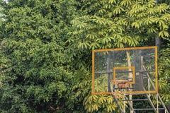 A árvore e aquela do fundo da aro de basquetebol refletem a luz solar na manhã imagens de stock