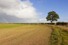 Árvore e arco-íris de cinza imagens de stock royalty free