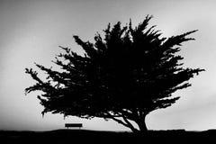 Árvore e banco Fotografia de Stock