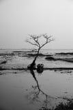 Árvore e barco com por do sol Fotografia de Stock Royalty Free