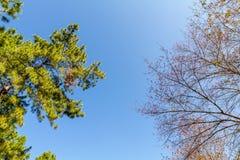 Árvore e céu fotos de stock