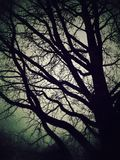 Árvore e céu Foto de Stock Royalty Free