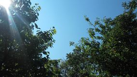 Árvore e céu azul foto de stock royalty free