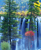 Árvore e cachoeira do outono no jiuzhaigou Fotos de Stock Royalty Free