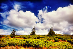 Árvore e campo da paisagem sob o céu azul Imagens de Stock Royalty Free