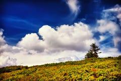 Árvore e campo da paisagem sob o céu azul Fotografia de Stock