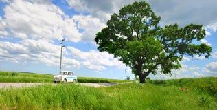 Árvore e carro Imagens de Stock Royalty Free