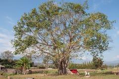 Árvore e cavalo de madeira em Pai fotos de stock