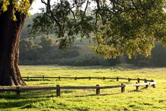 Árvore e cerca Fotografia de Stock