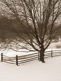 Árvore e cerca do inverno do Sepia fotografia de stock royalty free