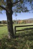 Árvore e cercas Imagens de Stock Royalty Free