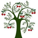 Árvore e cereja Fotografia de Stock
