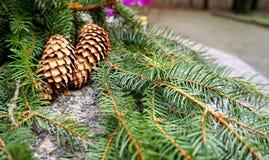 Árvore e cones de Natal Imagens de Stock