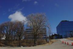 Árvore e construções do céu azul imagem de stock