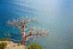 Árvore e costa fotos de stock royalty free