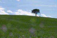 Árvore e cruz sós, Tuscan Fotos de Stock