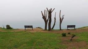 A árvore e de madeira sentam-se video estoque