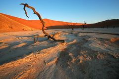 Árvore e duna, Sossusvlei, Namíbia Imagens de Stock Royalty Free