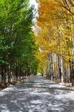 Árvore e estrada Imagem de Stock Royalty Free
