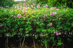 Árvore e flor da mola Fotografia de Stock Royalty Free