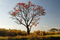 Árvore e flores vermelhas fotografia de stock royalty free