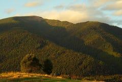 Árvore e floresta Foto de Stock