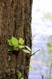 Árvore e folhas pequenas novas imagem de stock