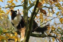 Árvore e gato de Apple no outono Imagens de Stock