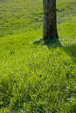 Árvore e grama Foto de Stock