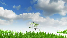 Árvore e grama crescentes, animação 3d ilustração royalty free