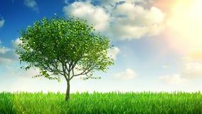 Árvore e grama crescentes, animação 3d