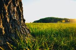 Árvore e grama do baixo ângulo fotografia de stock