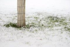 Árvore e grama na neve imagens de stock