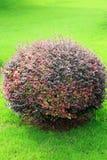 Árvore e gramado Fotos de Stock Royalty Free