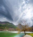 Árvore e lago fotografia de stock