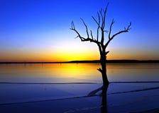 Árvore e lago Fotos de Stock
