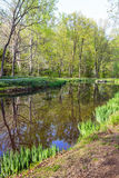Árvore e lagoa Imagens de Stock