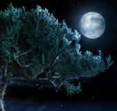 Árvore e lua Fotos de Stock Royalty Free