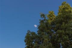Árvore e lua solitárias Imagens de Stock