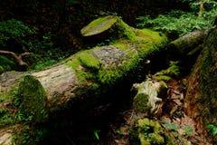 Árvore e madeira Fotografia de Stock Royalty Free