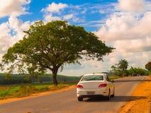 Árvore e maneira Fotos de Stock