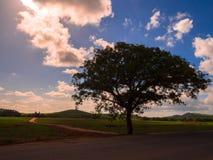 Árvore e maneira Foto de Stock