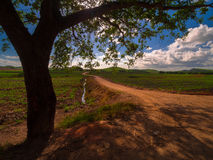 Árvore e maneira Foto de Stock Royalty Free